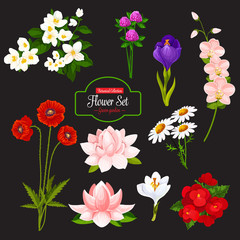 Flower cartoon icon of blooming garden plant