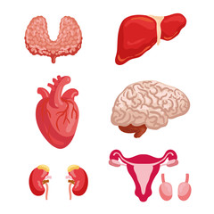Human organ anatomy icon for medicine design