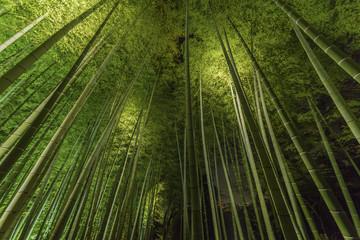Spoed Foto op Canvas Bamboo Bamboo grove, bamboo forest at Arashiyama, Kyoto, Japan
