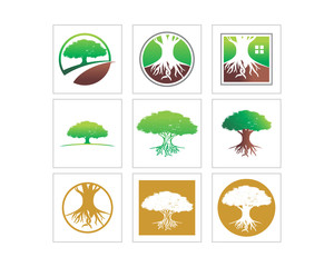 tree jungle forest wood image vector icon set