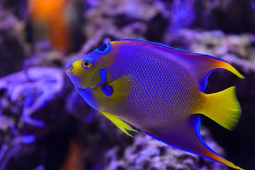 One Fish Blue Fish