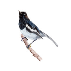 Bird  watercolor illustrations and Hand drawn sketch. Watercolor painting Cute Bird. Animal Illustration isolated on white background.