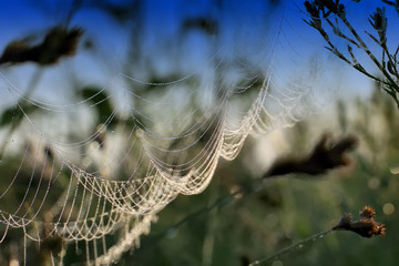 spider web with dew drops on plants. Macro photography