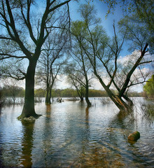 the trees are flooded with water in a spring day