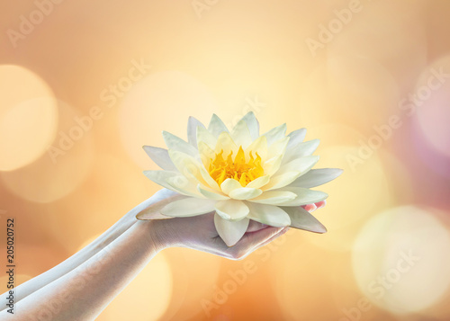 ... Buddha's birthday, Buddha Purnima worshiping, and world human spirit concept with woman prayer's hands holding lotus water illy flower