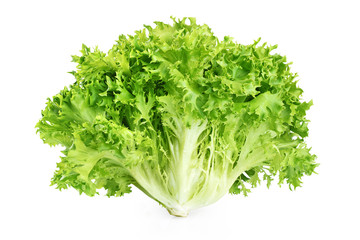 Fresh endive lettuce isolated on white background.