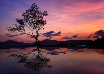 silhouette of big tree at beautiful twilight sky background.
