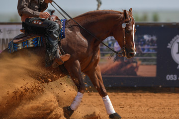 The side view of a rider in jeans, cowboy chaps and checkered shirt on a reining horse slides to a stop in the red clay an arena.