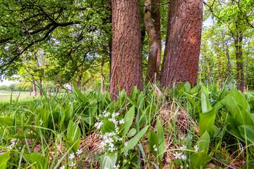 Zielony krajobraz Podlasia