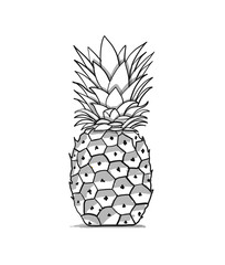 Pineapple, sketch for your design