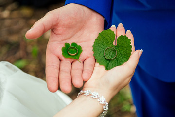 wedding rings on green leaves in the hands of the newlyweds