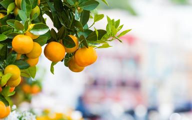 Oranges growing on street of Capri, Italy