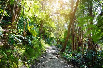 Kilauea Iki trail in Volcanoes National Park in Big Island of Hawaii.