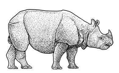 Indian rhinoceros illustration, drawing, engraving, ink, line art, vector