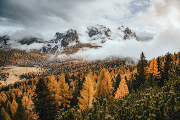 Wall Mural - Great view of the yellow larches. National Park Tre Cime di Lavaredo, Dolomiti alp, Tyrol, Italy.