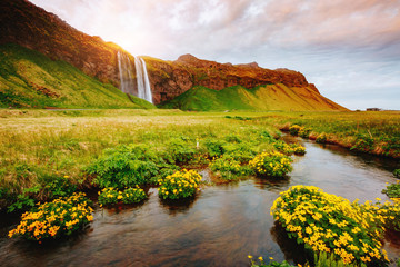 Lovely view of blooming green field. Location place Seljalandfoss waterfall, Iceland.