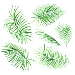 Watercolor palm leaves on white background. Tropical elements for your design.