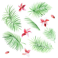 Set of watercolor palm leaves and flowers on white background. Tropical natural elements for your design.