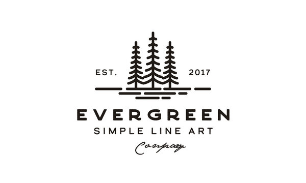 pine evergreen fir hemlock spruce conifer cedar coniferous cypress larch pinus tree forest vintage retro hipster line art Logo design