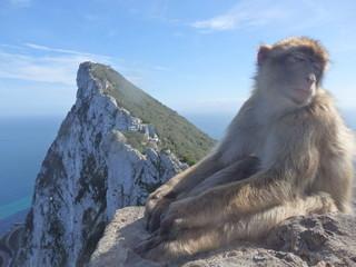 Macaque in Gibraltar