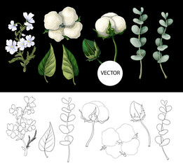 Cotton flowers and eucalyptus branch isolated on black background. Vector illustration