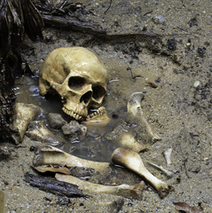 Skull and bones in pit which has flood in raining day on scary graveyard area