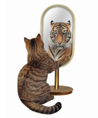 The cat looks at in the mirror. It sees the reflection of a tiger there. White background.