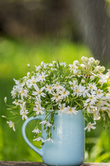 A bouquet of white delicate spring flowers in a blue simple cup in the rain in the garden.