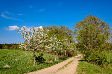 Baumblüte an einem Feldweg im Naturpark Mecklenburgische Schweiz bei Marxhagen
