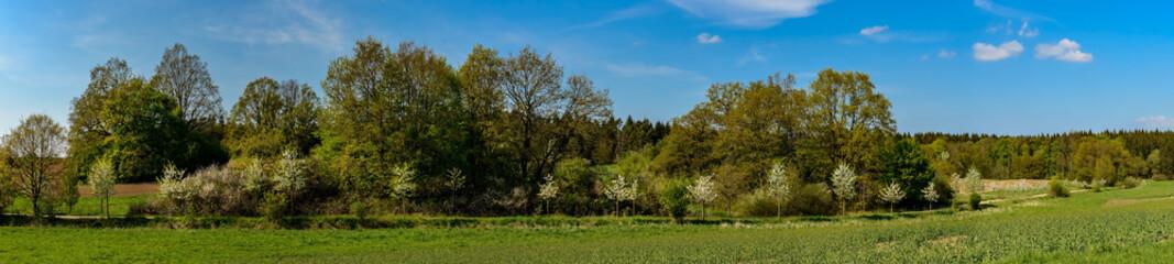 Feldweg mit blühenden Bäumen im Naturpark Mecklenburgische Schweiz bei Marxhagen - Panorama aus 6 Einzelbildern