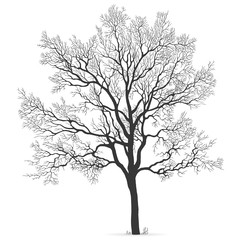 Oak Tree vector silhouette