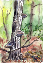 Old Birch Polypore mushrooms on it, watercolor illustration. Landscape of dense forest, hand drawing, sketch.