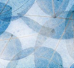 Wall Mural - Skeleton Leaves Flower Composition on white  background,transparent blue leaves