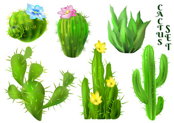 Set of cactus. Vector colorful illustration.