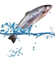 salmone che esce dall'acqua