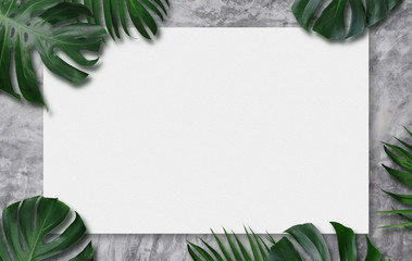 Wall Mural - Monstera deliciosa tropical leaves and blank canvas on cement background