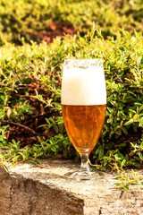 Beer in a glass on granite stone. Summer evening in the garden.