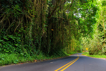 Famous Road to Hana fraught with narrow one-lane bridges, hairpin turns and incredible island views, curvy coastal road with views of cliffs, waterfalls, and miles of rainforest. Maui, Hawaii