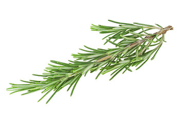 Fresh rosemary branch on a white background