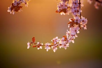 Pink flower branch