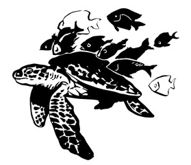 sea turtle. black-and-white