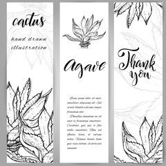 Hand drawn agave plant
