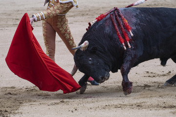 Papiers peints Corrida Bullfighter next to the bull in the ring