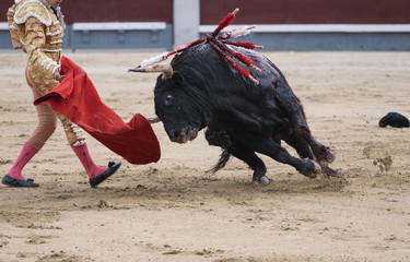 Printed roller blinds Bullfighting Bullfighter next to the bull in the ring