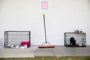 A rabbit and a potbelly pig wait in cages at a Red Cross evacuation center in Pahoa