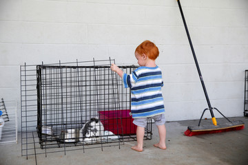 Nimai Peacock, 1, of Leilani Estates, looks at a rabbit at a Red Cross evacuation center in Pahoa