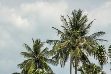 Sky with coconut tree