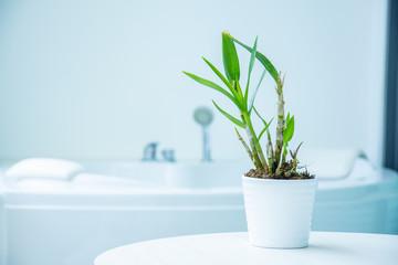 small tree and bathtub