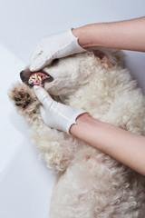 Checking dog teeth
