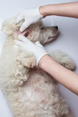 Examination dog in hospital